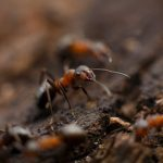 Reasons why professional termite control is crucial for your building