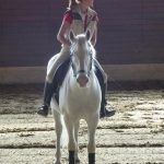 How to get the best tools needed for proper horse care?